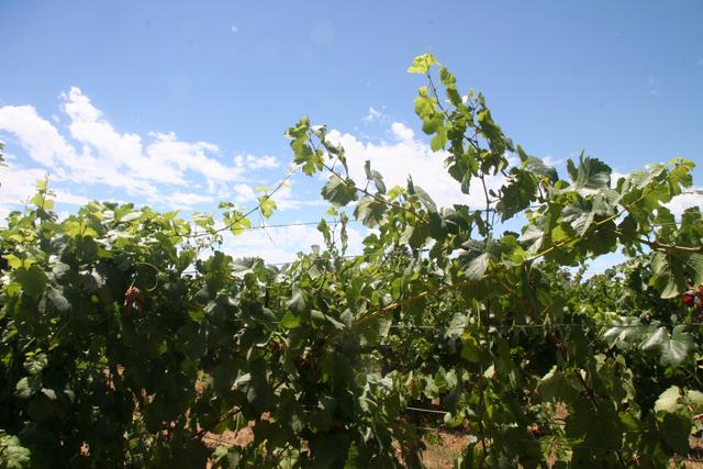 Bio-Microbics BioBarrier HSMBR winery wastewater treatment system